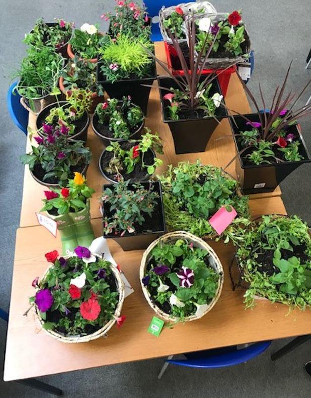 Planters pots